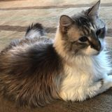 Pet Care Job in Seattle