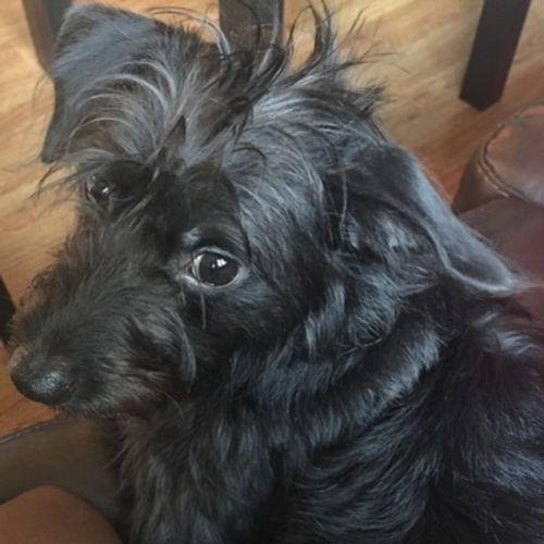 Pet Care Job Darlene Joseph's Profile Picture