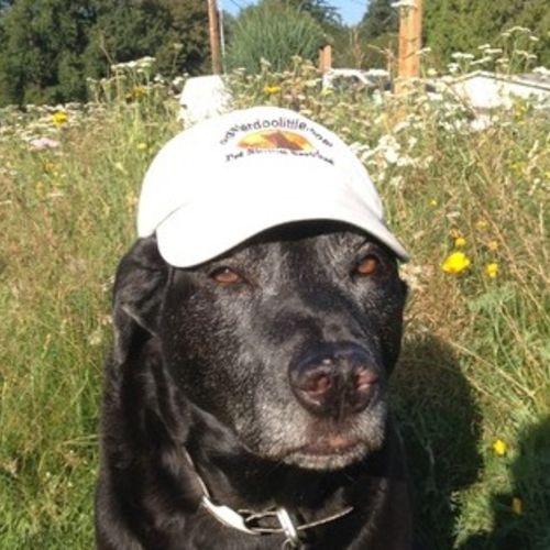 Pet Care Provider Steven Bell Gallery Image 3