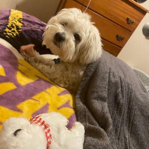 Pet Care Provider Juan O's Profile Picture