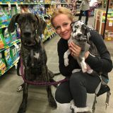 Pet lover owner of 2 dogs experienc with walking training dog sitting for Hire dog boarding