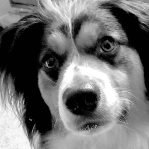 Pet Care Job Eva F's Profile Picture