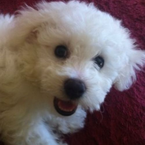 Pet Care Provider Brittany C Gallery Image 1
