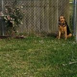 Consistent Dog walker/in Fort Pierce area, Hutchinson Island Florida