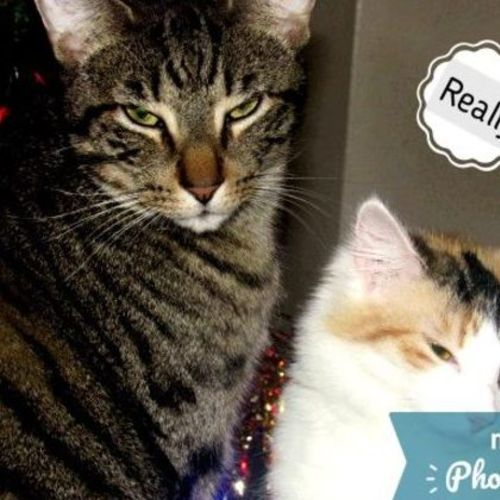 Pet Care Provider Kristi S Gallery Image 1