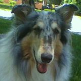 Handsome Sweet Elderly Colle Gent Requires In-Home Care/House Watching in Steele Creek/Carowinds area.