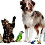 Excellent Pet Care Provider Available Today.