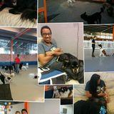 Dog Walker, Pet Sitter, Kennel in San Jose