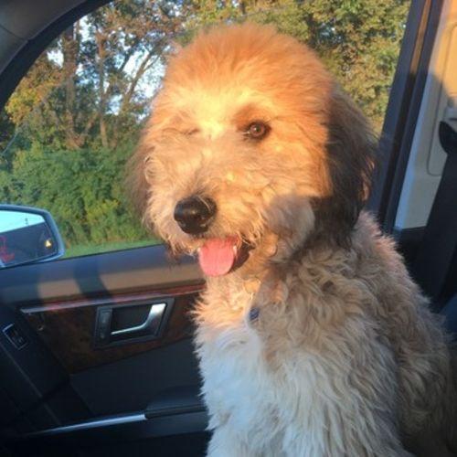 Pet Care Job russ k's Profile Picture