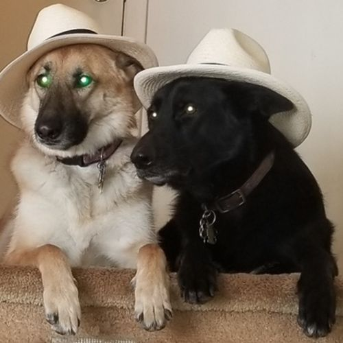 Pet Care Job Gregory M's Profile Picture
