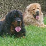 Confident pet sitter needed for 9 big furballs and 2 little furballs.