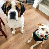 Pet Sitting Jobs Morinville, Alberta: Dog Sitter & Dog Walking Jobs