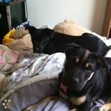 Dog Walker Job, Pet Sitter Job in Pullman