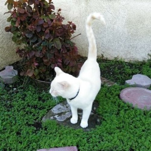 Pet Care Provider Robin T Gallery Image 1