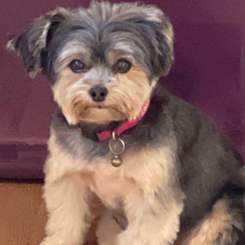 Pet Care Provider Marcy H's Profile Picture