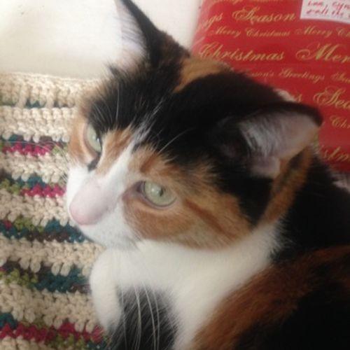 Pet Care Provider Grace Matson Gallery Image 1