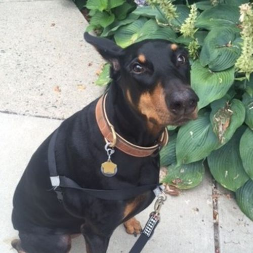 Pet Care Job Benjamin Weisman's Profile Picture