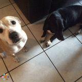 Pet Care Job in Davie