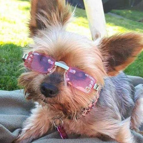 Pet Care Provider Nicole C's Profile Picture
