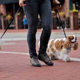 Dog Walker, Pet Sitter, Kennel in Grand Rapids