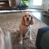 Pet Sitting Needed ASAP!