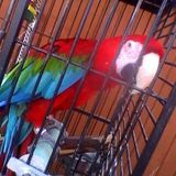 Dependable Bird - Dog & Small Animal Sitter