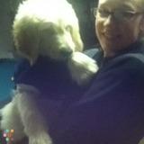 Dog Walker, Pet Sitter in New Milford
