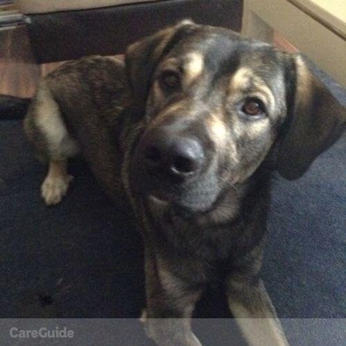 Pet Care Provider Rheanna W's Profile Picture