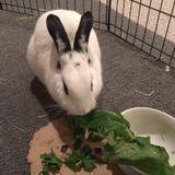 Seeking a bunny Sitting Professional Job in Frisco, Texas
