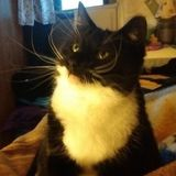 Available: Dedicated Cat Sitting Professional in Hellertown, Pennsylvania