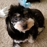 Available: Knowledgeable Pet Carer in Modesto, California