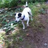 Dog Walker, Pet Sitter in Silverdale