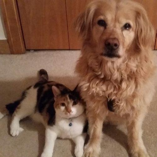 Pet Care Job Kelly O Gallery Image 1
