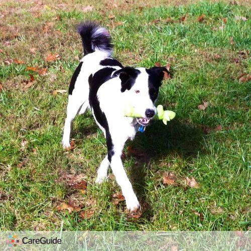 Pet Care Provider Katie S's Profile Picture