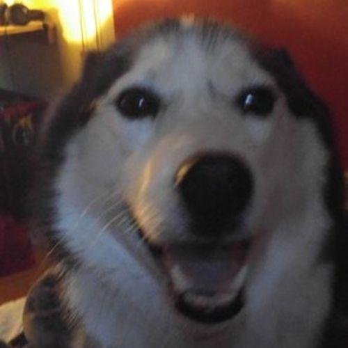 Pet Care Provider Jasmine Macias Gallery Image 2