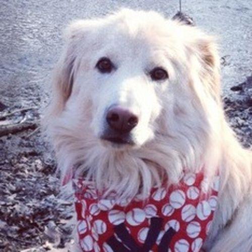 Pet Care Provider Michele P's Profile Picture