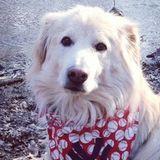 Walk-Bark-Run Professional Pet Sitter Servicing Bergen County.