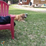 Dog Walker, Pet Sitter in Biddeford