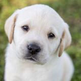 Available: Knowledgeable Petsitter in Neenah, Wisconsin
