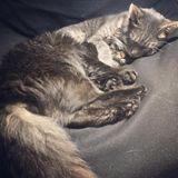 Employing a Capable Animal Caregiver in Boulder, Colorado