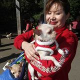 Home and Cat Sitter in San Bruno Millbrae SSF