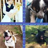 Present Pet Care Provider