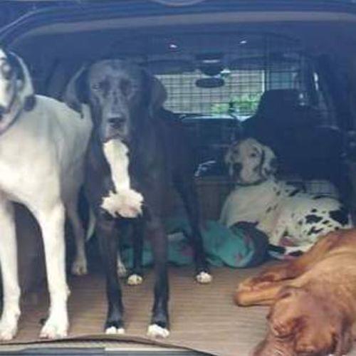 Pet Care Provider Laura E's Profile Picture