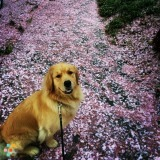 Dog Walker Job in Washington