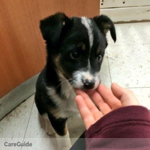 Pet Care Provider Savannah K's Profile Picture