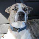 Dog Walker Job, Pet Sitter Job in Conroe