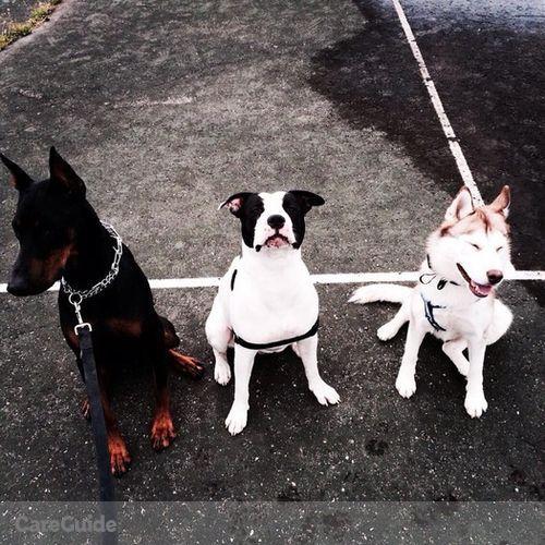 Pet Care Provider Greg A's Profile Picture