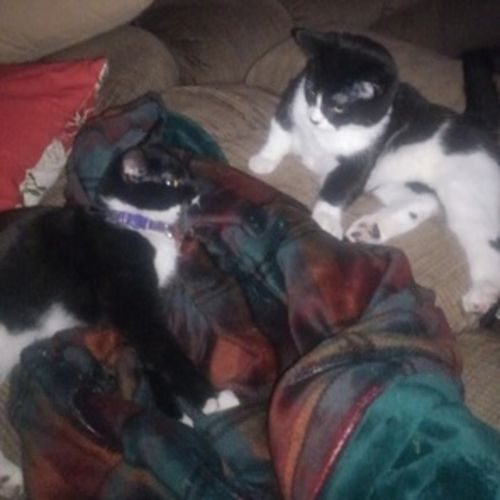Pet Care Provider Krystal L Gallery Image 3
