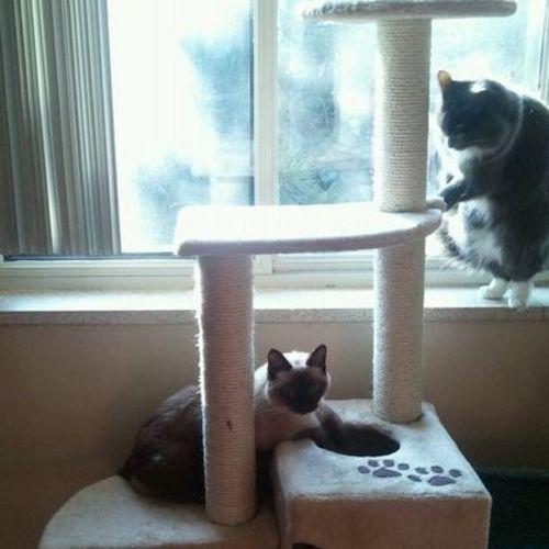 Pet Care Provider Lisa L Gallery Image 1