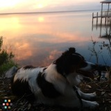 Dog Walker, Pet Sitter in Destin